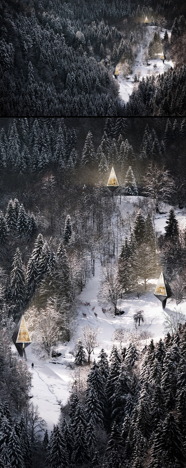 Modern Forest Homes (1)