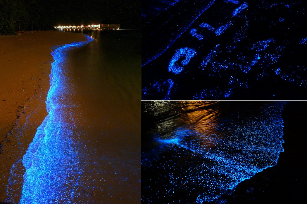 Glowing Beach Awash at Vaadhoo Island in Maldives (5)
