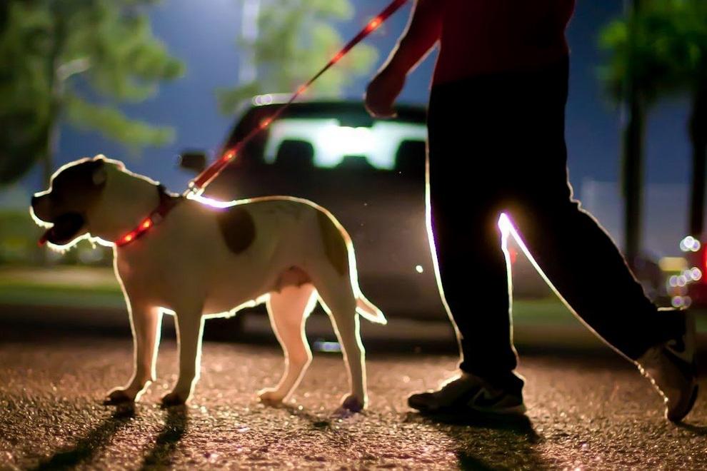 LED Lighted Dog Leash Collar By Dog-E-Glow