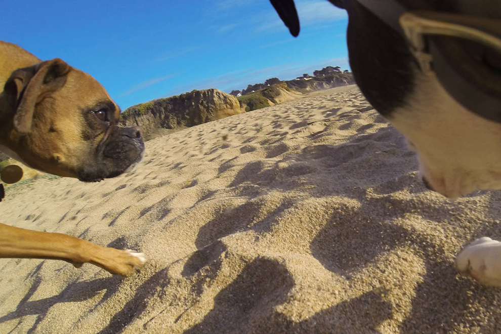 GoPro Fetch (4)
