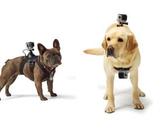 GoPro Fetch (1)