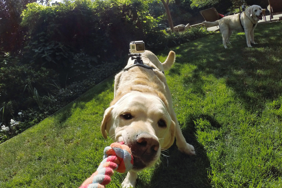 GoPro Fetch (3)