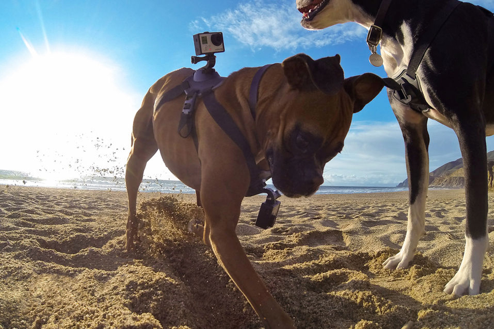 GoPro Fetch (2)