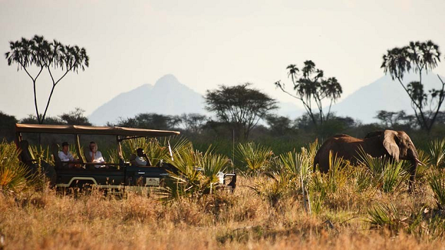 Kenya Wildlife Safari An Experience You Will Never Forget (4) (3)